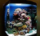 sera 31100 marin Biotop Cube 130 ein 130 l Meerwasser-Komplettaquarium mit PL-T5 Beleuchtung und Filtration - 5