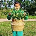 natürlichem Seegras Woven Bauch Korb, goodchanceuk 3/Set Blumentopf Korb mit Griff Garten Wäschekorb Container Home von SZETOSY auf Du und dein Garten