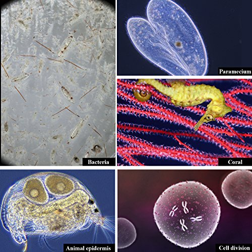 USCAMEL Microscopio