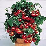 Rowentauk Früchte Samen, Blaubeere/Zitrone/Erdbeere/Tomaten Samen für Hausgarten Pflanzen Indoor und Outdoor zur Verfügung