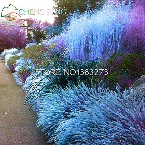semi-di-erba-perenni-100-semi-giardino-ornamentale-facile-crescere-piante-da-seme-tohum-vaso-bonsai-