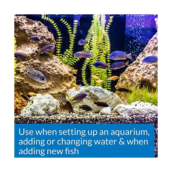 AQUARIAN My First Goldfish Bundle with Fishkeeping Information Guide (Amazon Exclusive)