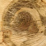 amazon Echo Folie Skin Sticker aus Vinyl-Folie Aufkleber Baumstamm Holz Look Baum