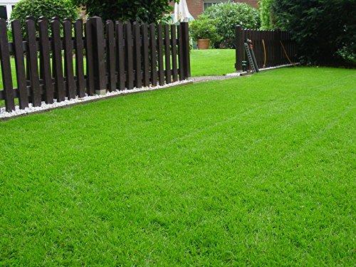 Rasen Sport und Spiel Grassamen Sportrasen Rasensamen Rasensaat Gras 1kg - Qualität zum fairen Preis (Hund Rasen Plus)