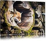 Fuchs im Baumstamm Format: 60x40 auf Leinwand, XXL riesige Bilder fertig gerahmt mit Keilrahmen, Kunstdruck auf Wandbild mit Rahmen, günstiger als Gemälde oder Ölbild, kein Poster oder Plakat