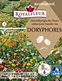 Royalfleur PFRE08823 Graines de Fleur Utiles pour Repousser les Doryphores 8 m²
