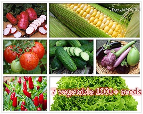 1000 + 7 Seeds sortes de légumes comprennent les graines de concombre et de tomate NO légume OGM pour la maison jardin