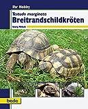 Breitrandschildkröten, Ihr Hobby