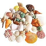 Mumoo Bear 200g/pack Natural Beach Shell&Conch SeaShells Aquarium Fish Tank Landscaping Decoration
