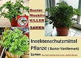 20x Buster Vanillemark insektenschutzmittel Moskito Killer Pflanze Samen selten In Deutschland Garten Innen-Außen Bereich #227