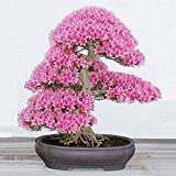 Bluelover 10pcs Garden Cherry Blossoms Bonsai Flower Seeds Courtyard Potted Plant