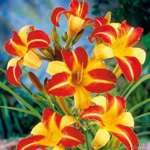 Blumenzwiebeln mit Duroplast-Beschichtung