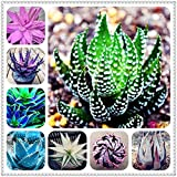 AGROBITS 100pcs Aloe bonsai Mix Houseplants eccellenti Succulente Aloe Vera bonsai Usa bellezza commestibile Cosmetic Bonsai piantare piante: misto