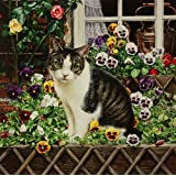 Pansy, the Tabby Cat with Flowers in the Window Box, Greeting Card by Geoff Tristram, Greetings Card Size Approx. 140 x 140mm