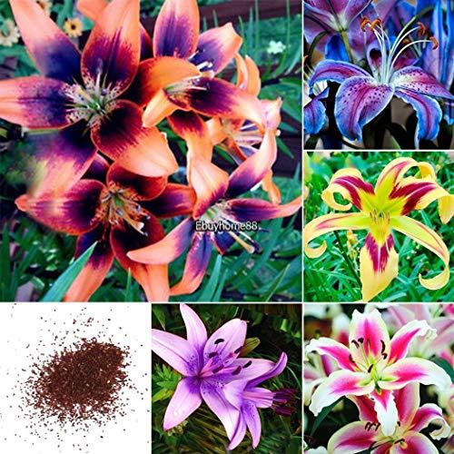 Portal Cool 1: 100 Stücke Schlumbergera Flores Weihnachtskaktus Plantas, Bonsai Pflanze für Gardasee