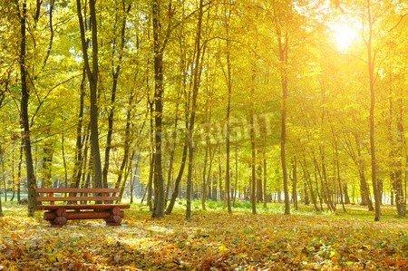 "Poster-Bild 50 x 30 cm: ""beautiful autumn park and sunrise"", Bild auf Poster"