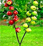 30pcs / bag semi di melo nano albero bonsai semi MINI frutta per piantare giardino di casa
