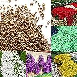 Portal Cool Gelb: 8820 8D77 Bodendecker Blumengarten Pflanze Blumensamen Schöne 1Bag 100Pcs