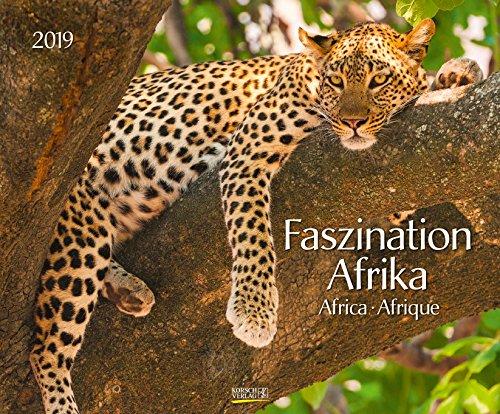 Faszination Afrika 208719 2019: Großer Wandkalender. Foto-Kunstkalender afrikanischer Tiere in der Natur. Querformat 55 x 45,5 cm. Edles Foliendeckblatt und Glanzlackierung.