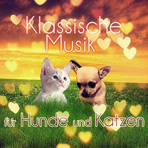 Klassische Musik für Hunde und Katzen - Entspannungsmusik Wenn sie Allein zu Hause, Beruhigende Musik, Instrumentalmusik für Haustiere, Gelassenheit für Welpen & Kätzchen, Tiefenentspannung (Hause Musik Zu Allein)