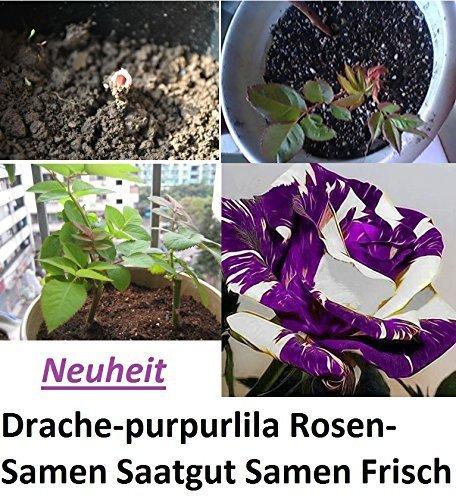 15x Drachen purpurlila Rosen Samen Saatgut Blumensamen Saatgut Blumen Pflanze Anleitung für die Rosen Samen #312