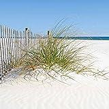 Artland Qualität I Glas Küchenrückwand ESG Spritzschutz Küche 60 x 60 cm Landschaften Strand Foto Creme F1NG Schöne Sanddüne mit Gräsern und hübschem Zaun