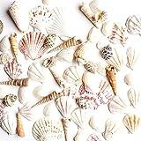 Wuudi Sea Shell SPECIMEN Kit 18pcs, Mitte Größe Schöne Acryl Alte Souvenir carft Shell SPECIMEN