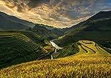 Kunstdruck/Poster: sarawut intarob RiceTerrace Vietnam -