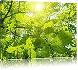 Grüne Blätter Bild auf Leinwand, XXL riesige Bilder fertig gerahmt mit Keilrahmen, Kunstdruck auf Wandbild mit Rahmen, guenstiger als Gemaelde oder Bild, kein Poster oder Plakat, Format:100x70 cm