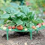 Erdbeer Reifer Stecksystem