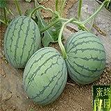 Zeitlich befristetes Sonderangebot Sommer Ausgeschlossen Regelmäßige Mini-Wassermelone Keimungsrate Hoch Gemüse, Obst, Samen Etwa 20 Seed