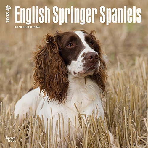 English Springer Spaniels International Edition 2018 Wall Calendar por BrownTrout Publishers