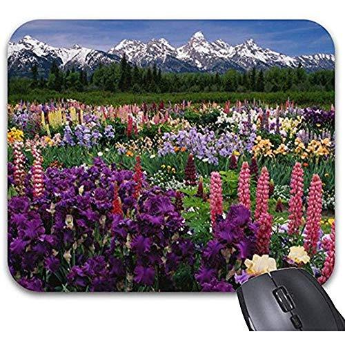 Mau Mat,Iris Und Lupine Garden Und Teton Range, Mauspad - Stilvolles Bürozubehör, Personalisiertes Computerspiel-Pad 30X25Cm -