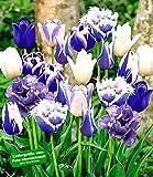 BALDUR-Garten Tulpen-Mix 'Blue Blend', 10 Zwiebeln