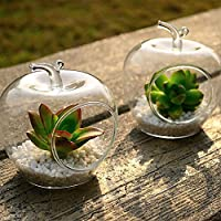 Artlass Pack Of 2 Hanging Glass Terrarium Air Plant contaciner Vase Apple Shape