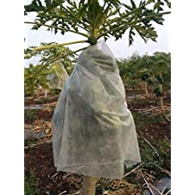 Oripol Non-Woven Papaya Cover(Size-1mX1.5m,Pack of 15)