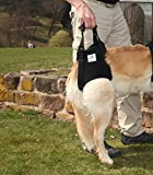 Pfaff medical dog rear carrier / lifting harness (Extra Large)