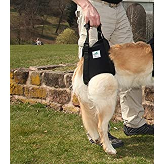 Dog carrying aid XS black / dog walking aid / dog rehabilitation aid, the aid harness for problems on the spine, hips… 15