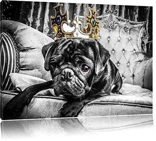 Mops mit Krone auf Thron schwarz/weiß Format: 80x60 auf Leinwand, XXL riesige Bilder fertig gerahmt mit Keilrahmen, Kunstdruck auf Wandbild mit Rahmen, günstiger als Gemälde oder Ölbild, kein Poster oder Plakat (Schwarze Und Weiße Krone)