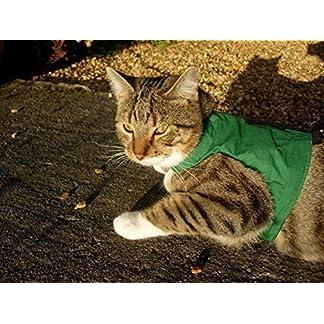 mynwood cat jacket/harness green adult cat - escape proof Mynwood Cat Jacket/Harness Green Adult Cat – Escape Proof 617fEXbNDkL