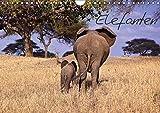 Elefanten (Wandkalender 2019 DIN A4 quer): Die grauen Riesen von ihrer schönsten Seite (Monatskalender, 14 Seiten ) (CALVENDO Tiere)