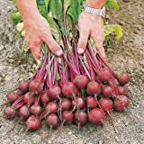 Suttons Seeds 184212 Speedy Veg F1 Action Samen, für Rote Beete