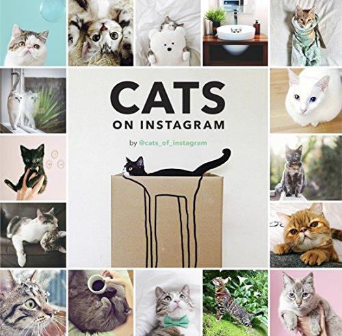 cats-on-instagram