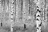Komar XXL4–023368x 248cm'Schwarz und Weiß Forest Woods' Tapete Wandbild–Weiß/Creme (4Stück)