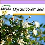 SAFLAX - Mirto - 30 semi - Myrtus communis