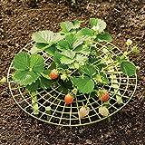 Anladia 5er Set Erdbeer Frucht Reifer Erdbeerstütze Schneckenschutz Gitterablage Staudenhalter Gartenhelfer Pflanzenhalter