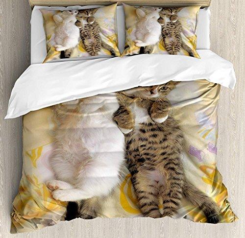 Lustiger Bettbezug-Set Queen Size, Kätzchen-Geschwister liegen neben verschlafenen Köpfen Katze Tierliebhaber Beste Freunde Bild, dekorative 3-teiliges Bettwäscheset mit 2 Kissen-Shams, Multicolor