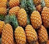 #6: Nema Dwarf pineapple seeds - 100 Pcs