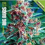Ed Rosenthal's Big Buds 2010 Calendar