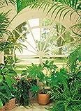 Fototapete WINTERGARTEN 183x254 Palmen Fenster Park Wintergarden Pflanzen grün